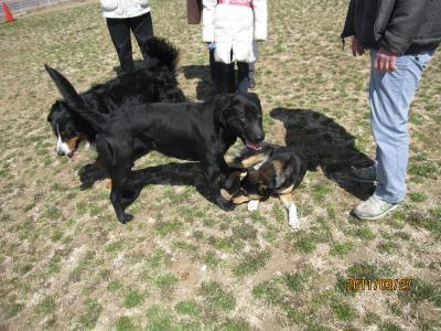 名犬牧場3