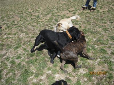 名犬牧場8