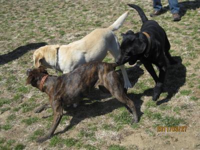 名犬牧場7