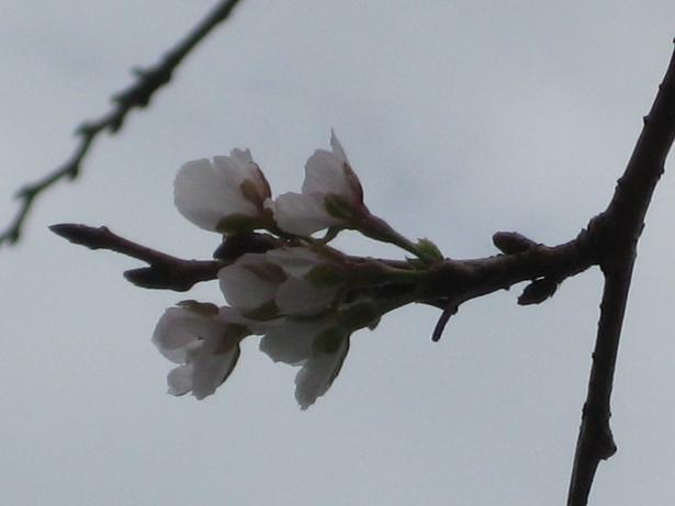 2012-9-30岩本山公園いのりあわせ 005