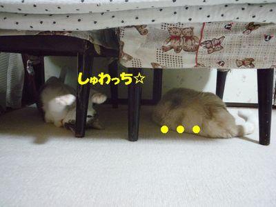 しゅわっち☆