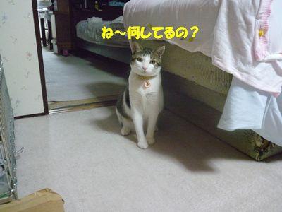 ね~何してるの?
