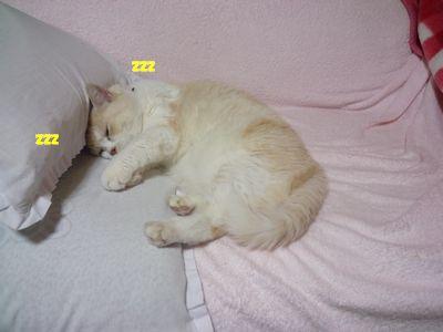 ソファーでお昼寝☆
