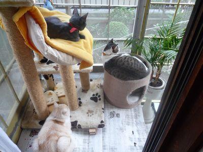 3にゃん猫ハウスにて