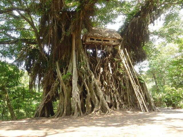 バヌアツの樹上10メートルの家屋