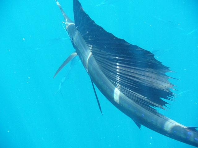2海中最速魚が七色の光線を疾走する