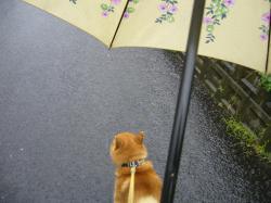 コピー ~ 雨の日のお散歩