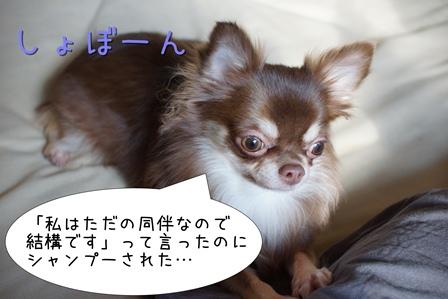 DSC00383_01.jpg