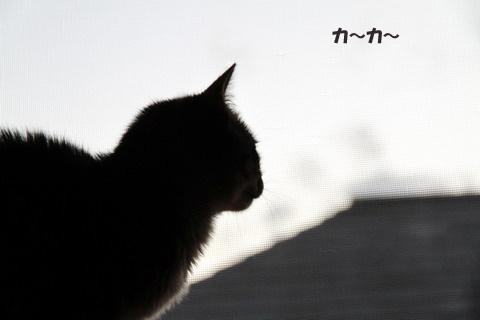 IMG_5455のコピー