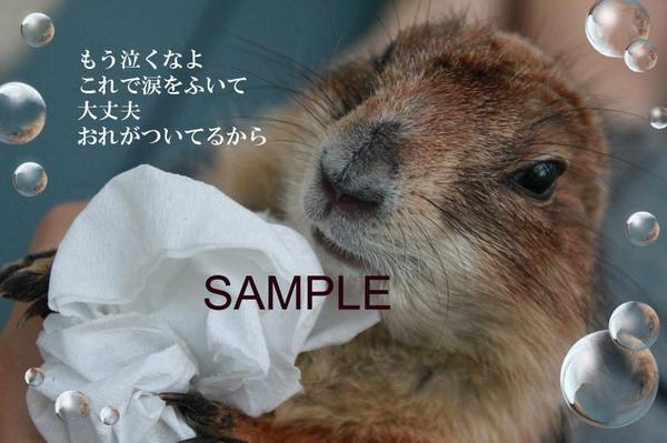 さんちゃんのコピー_2