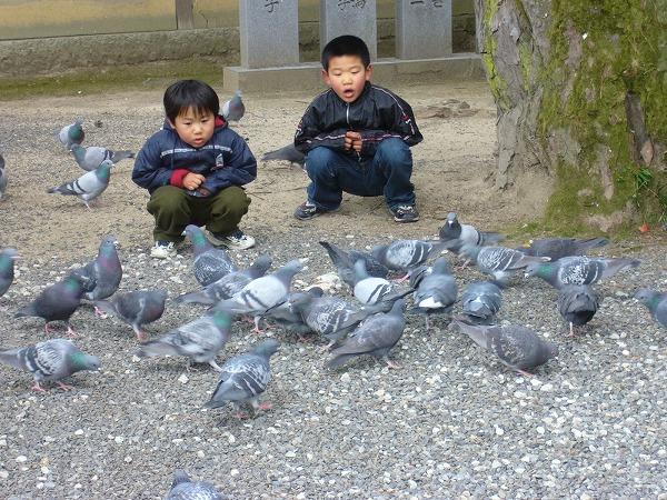 鳩と仲良し