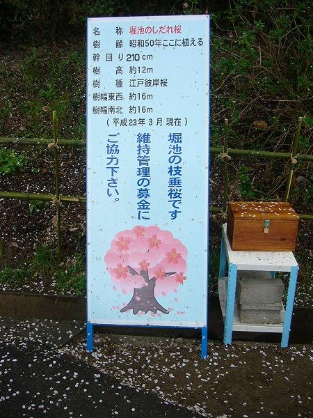 枝垂れ桜看板