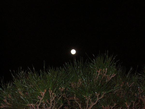 19日夜月