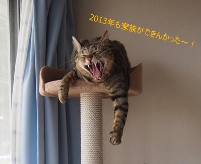 2013123101.jpg
