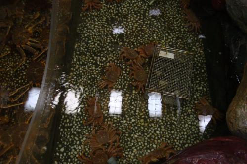 100809-013水槽毛蟹(縮小)
