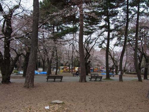 110403-090桜1(縮小)