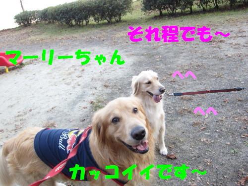 IMG_9008.jpg