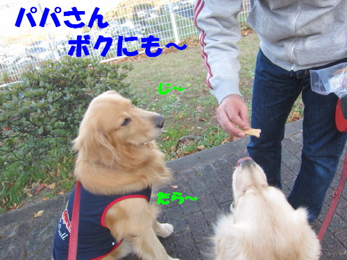 IMG_9010.jpg