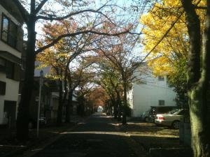 足立の桜並木