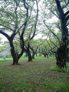 081019_小石川植物園②.jpg