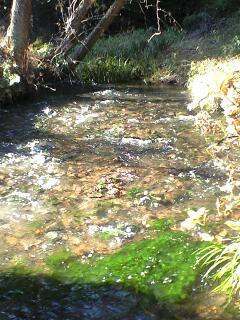 081207_1156~湧水の流れ.jpg