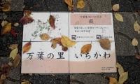 真間桜並木2