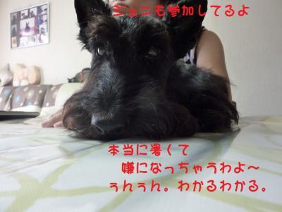 a_20100809214618.jpg