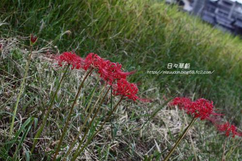 2012_09_22_9033 のコピー