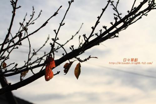 2012_11_10_9349 のコピー