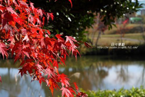 2012_11_25_9496 のコピー