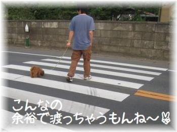 コピー ~ IMG_2674