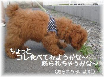 コピー ~ IMG_2670