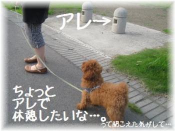 コピー ~ IMG_2698