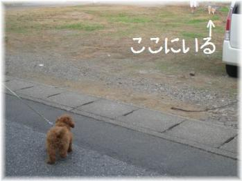コピー ~ IMG_2760