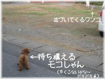 コピー ~ IMG_2761