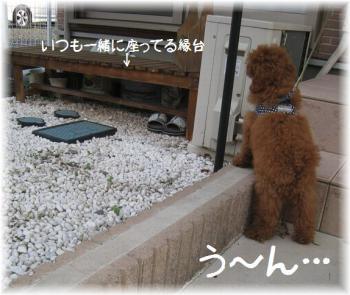 コピー (2) ~ IMG_2793