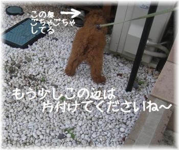 コピー ~ IMG_2798