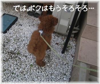 コピー ~ IMG_2800
