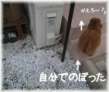 コピー ~ IMG_2801