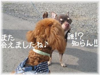 コピー (2) ~ IMG_3170