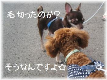 コピー ~ IMG_3174