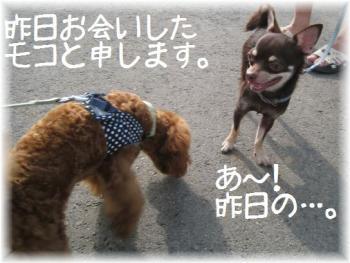 コピー ~ IMG_3175