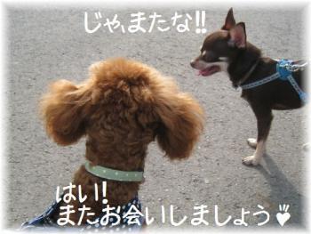 コピー ~ IMG_3177