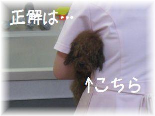 コピー ~ IMG_2995