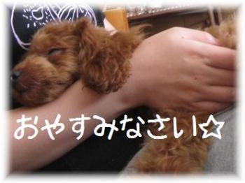 コピー ~ IMG_3816