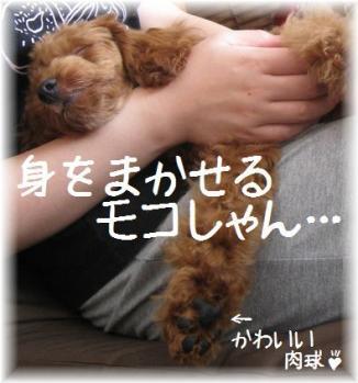 コピー ~ IMG_3821