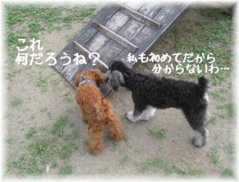 コピー ~ IMG_4751