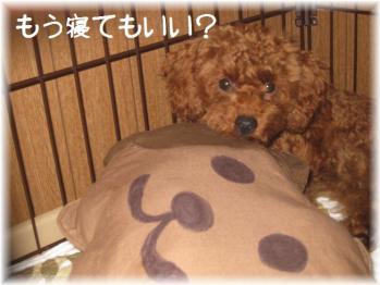 コピー ~ コピー ~ IMG_5091