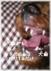 コピー ~ IMG_5187