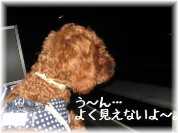 コピー (2) ~ IMG_5602